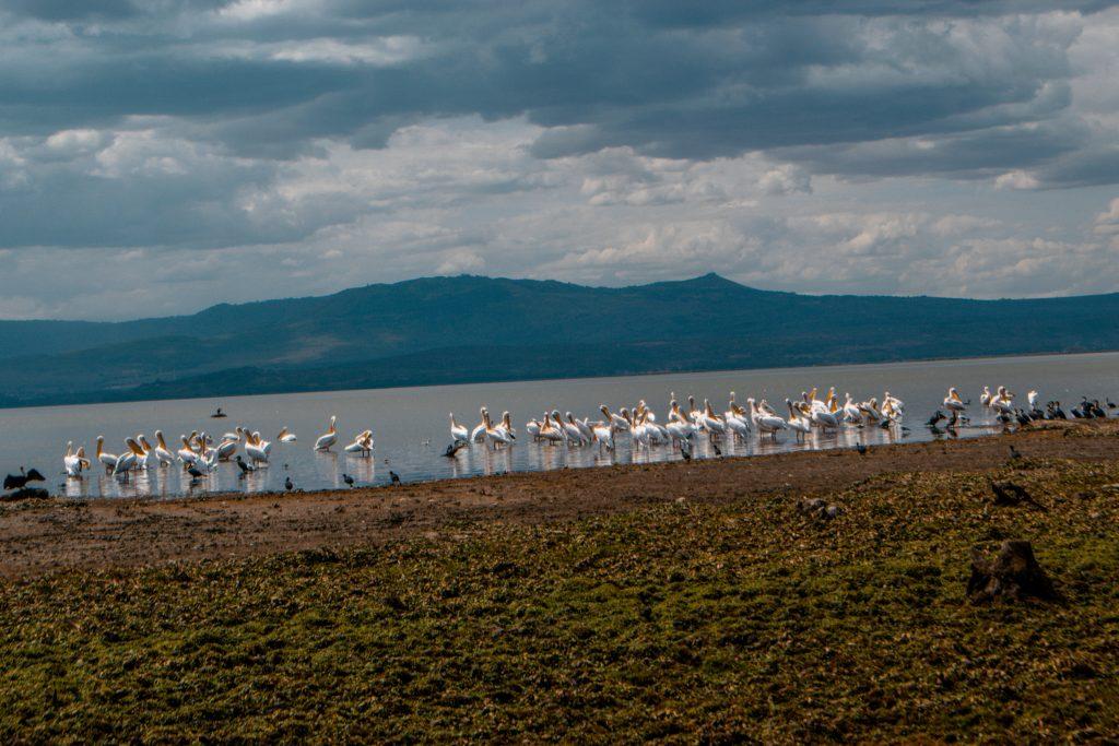 Crescent Island,Naivasha