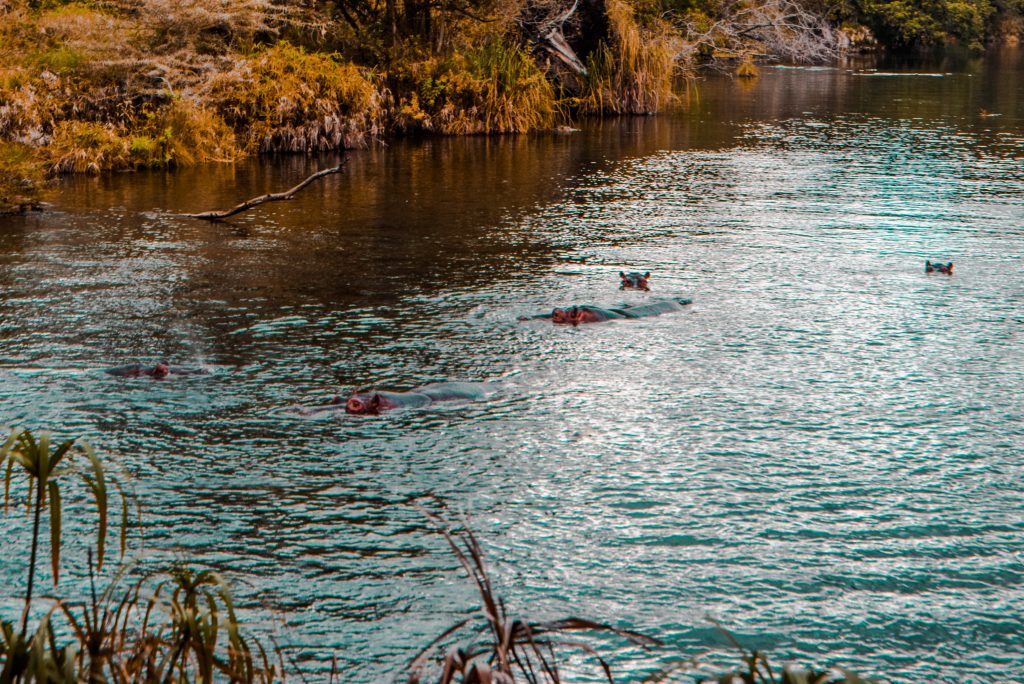 Mzima springs, Taita Taveta county