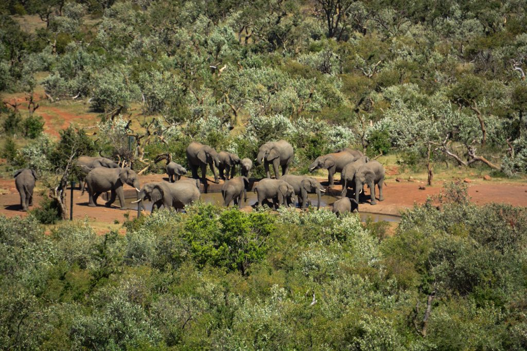 8 Reasons Why You Should Visit Olarro Conservancy | If you want to go on a game drive but the information on where to go is overwhelming then Olarro is the answer to your safari/game drive questions.