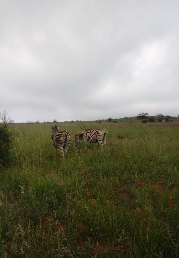 Top Things to do in Johannesburg that you cannot miss  WHAT TO EXPECT IN JOHANNESBURG  GETTING AROUND IN JOHANNESBURG